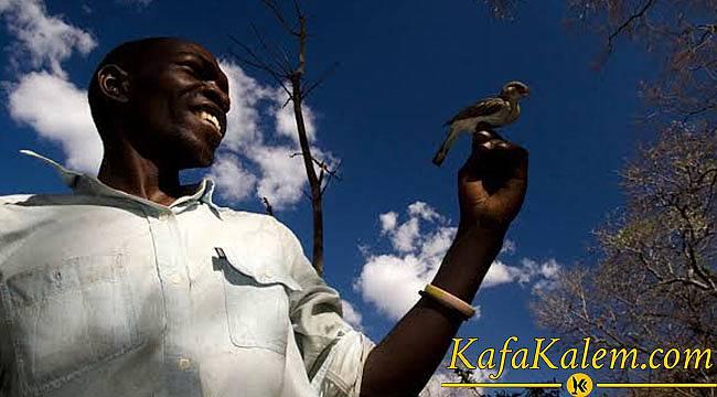 Uyanık Çiftçiler Bal Kılavuzu Kuşu İle Ortaklaşa Bal Buluyor