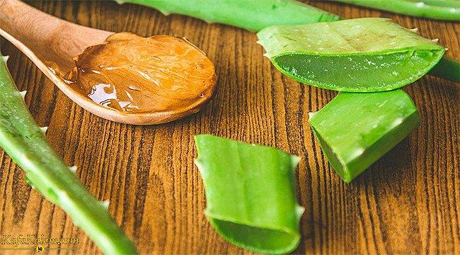 Tıp ve güzellik sektörünün baş tacı aloe veranın faydaları nelerdir? Evde yetiştimenin püf noktaları nelerdir?