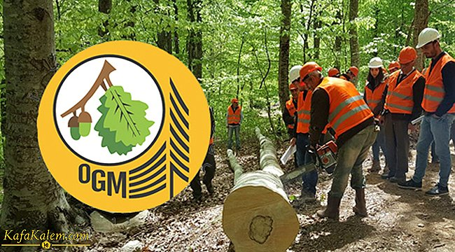 Orman Genel Müdürlüğü 2083 işçi alacak; OGM işçi alımı başvuru şartları nelerdir?